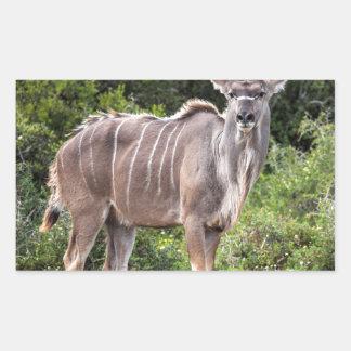 Kudu. Rectangular Altavoz