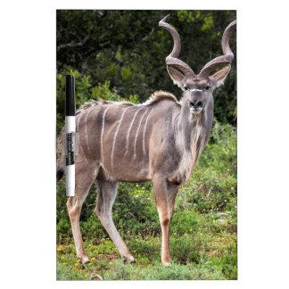 Kudu. Pizarra