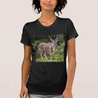 Kudu. Camiseta