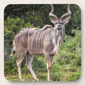 Kudu. Posavasos De Bebidas