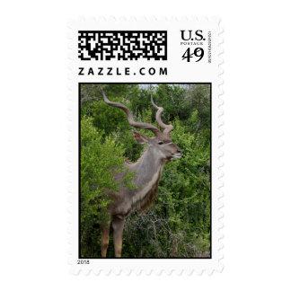 Kudu Stamps