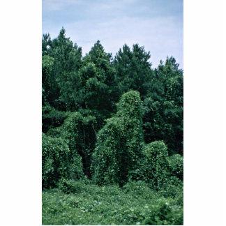 Kudzu/ Overgrown Forest Standing Photo Sculpture