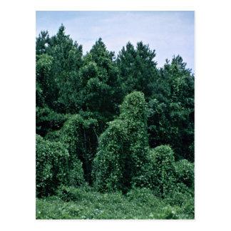 Kudzu/ Overgrown Forest Postcard