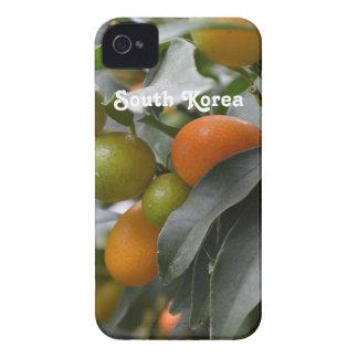 Kumquats de la Corea del Sur iPhone 4 Protector