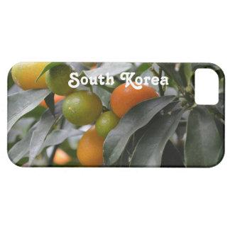 Kumquats de la Corea del Sur iPhone 5 Funda