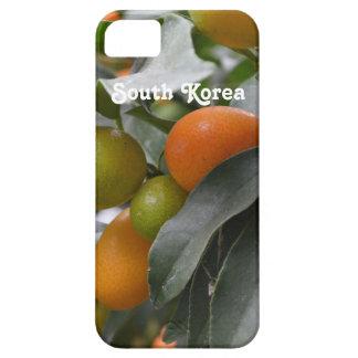 Kumquats de la Corea del Sur Funda Para iPhone 5 Barely There