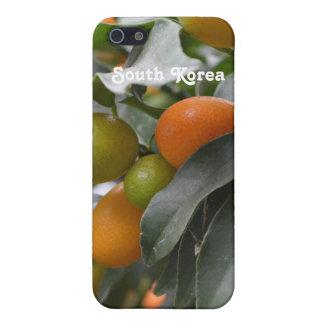 Kumquats de la Corea del Sur iPhone 5 Fundas