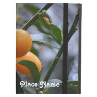 Kumquats de Nepal