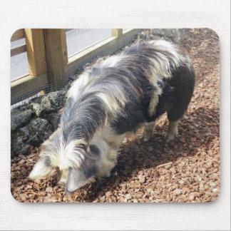 Kunekune Pig Mouse Pad