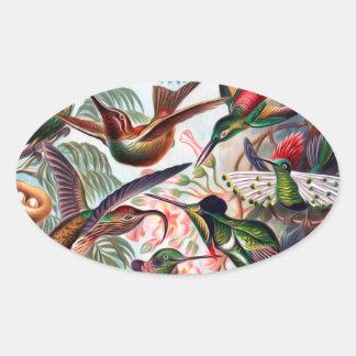 Kunstformen Der Natur Hummingbird Interpreted Oval Sticker