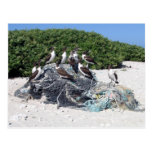 Kure Atoll Beach Debris Post Card