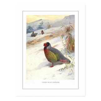 Kuser's Blood Partridge Postcard