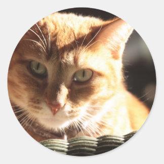 Kute Kitty! Classic Round Sticker