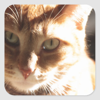 Kute Kitty! Square Sticker