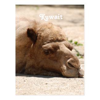 Kuwait Camel Post Card