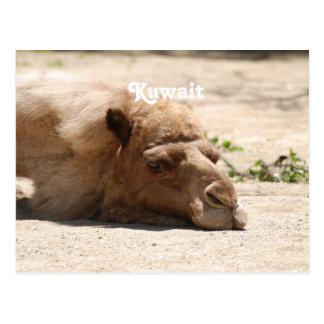 Kuwait Camel Postcard