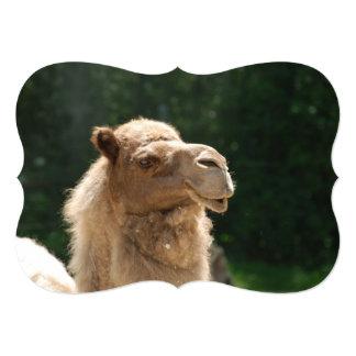 Kuwaiti Camel 5x7 Paper Invitation Card