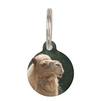 Kuwaiti Camel Pet Tag