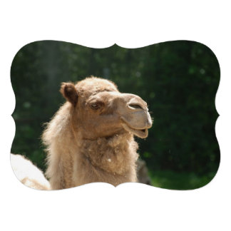 Kuwaiti Camel Custom Invites