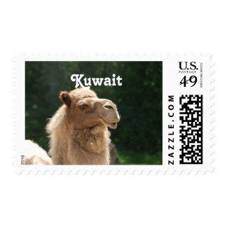 Kuwaiti Camel Postage Stamp