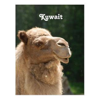 Kuwaiti Camel Post Card