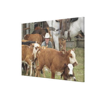 Kyle waiting with calf during round-up, canvas print