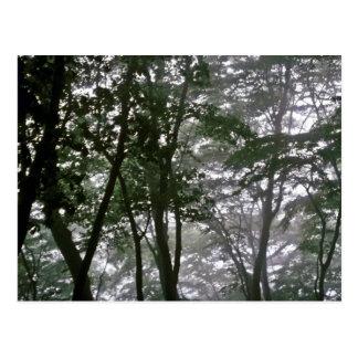 Kyongju - Misty Morning Post Card