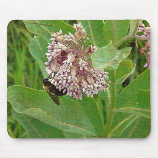 La abeja del manosear en el Milkweed Alfombrillas De Ratón