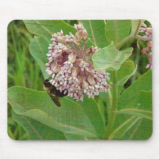 La abeja del manosear en el Milkweed Tapetes De Ratón