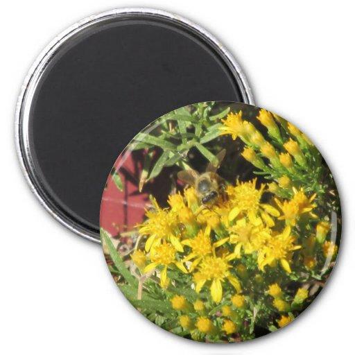 La abeja en amarillo florece el imán