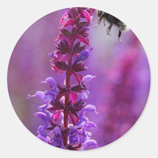 ¡La abeja está volando en una flor púrpura! Pegatina Redonda
