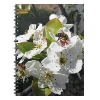La abeja poliniza un flor de la pera en primavera libros de apuntes con espiral