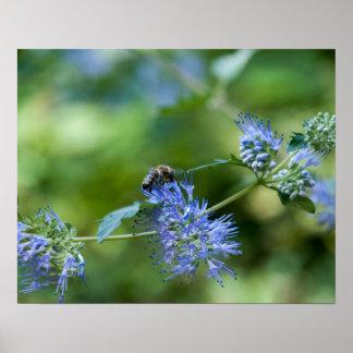 La abeja vuela en la flor póster