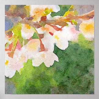 La acuarela Sakura de las flores de cerezo florece Posters