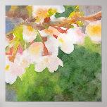 La acuarela Sakura de las flores de cerezo florece Póster