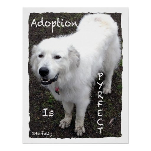 La adopción es Pyrfect-Sampsonss Posters