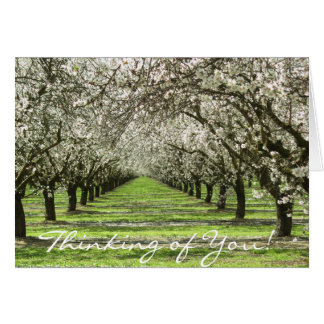 La almendra florece Notecard Tarjetas