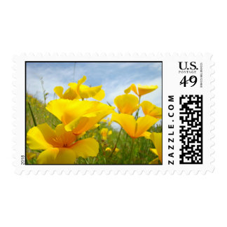 La amapola de California anaranjada florece sellos