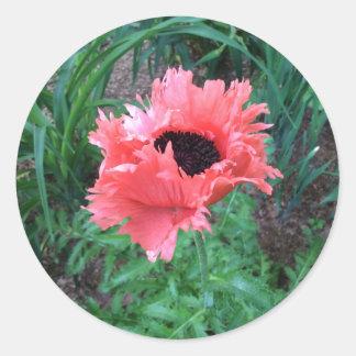 "La AMAPOLA oriental ""rosa riza"" -- Pegatina Redonda"