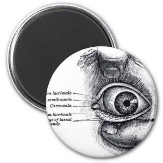 La anatomía del gris - globo del ojo imán redondo 5 cm