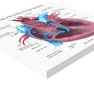 La anatomía humana del corazón estiró la impresión impresion de lienzo