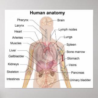 La anatomía humana poster