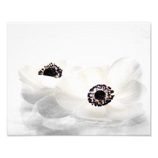 La anémona blanca florece la flor floral de las fotografías