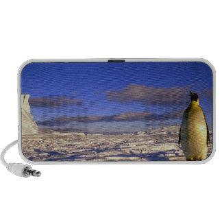 La Antártida, cabo Darnley. Pingüino de emperador Mp3 Altavoces