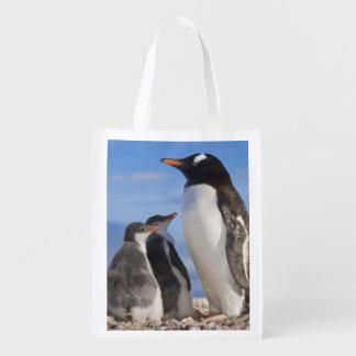 La Antártida, ensenada de Neko (puerto). Pingüino  Bolsas De La Compra