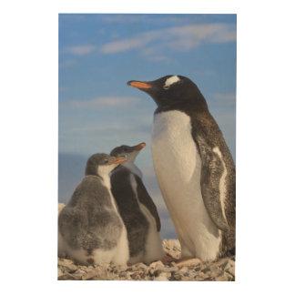 La Antártida, ensenada de Neko (puerto). Pingüino Cuadros De Madera