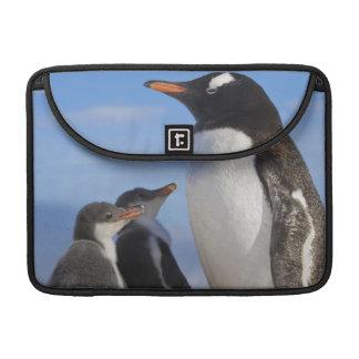 La Antártida, ensenada de Neko (puerto). Pingüino  Funda Para Macbook Pro