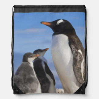 La Antártida, ensenada de Neko (puerto). Pingüino  Mochilas