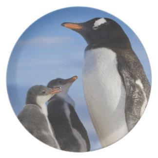 La Antártida, ensenada de Neko (puerto). Pingüino  Platos Para Fiestas
