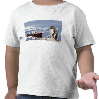 La Antártida, ensenada de Neko (puerto). Pingüino  Camiseta